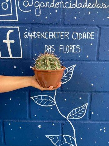Cactus coroa de frade